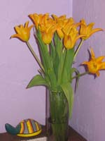 Orange flowers against violet wall