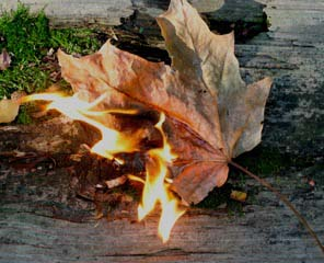 Autumn leaf on fire